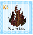 Flashcard letter K is for kelp vector image