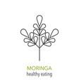 moringa line icon vector image