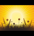 poppy meadow with sunburst sky vector image