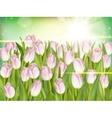 Fresh growing tulips EPS 10 vector image