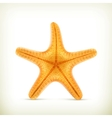 Starfish realistic icons vector image
