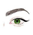 green female eye with eyeliner vector image