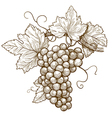 grapes on the branch vector image vector image