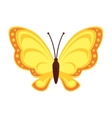 butterfly animal insect wing vector image