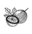 passion fruit engraving vector image