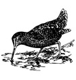 bird eurasian woodcock vector image vector image