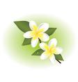 frangipani flowers vector image vector image