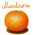 painted mandarin vector image