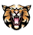 Roaring tiger head vector image