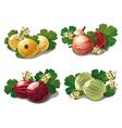 Set of ripe gooseberries vector image