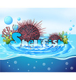 Sea urchin floating on water vector image vector image