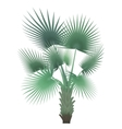 tropical exotic palm tree isolated vector image