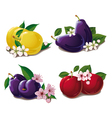 set of ripe plums vector image vector image