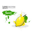 lemon hand drawn watercolor fruit on white vector image
