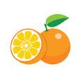 oranges on white background vector image