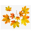 Autumn leaf maple and maple branch vector image
