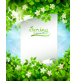 spring branch with fresh green leaves on the blue vector image