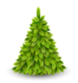 Christmas Tree Pine Isolated on White vector image