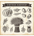 Vintage harvest set vector image
