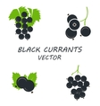 flat black currants icons set vector image