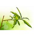 tea tree vector image