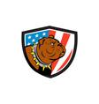 Bulldog Head USA Flag Crest Cartoon vector image