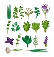 Cooking Herbs Collection vector image