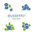 flat blueberry icons set vector image