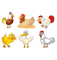 A rooster hen and duckling vector image