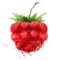 Berry logo design template Raspberry or vector image