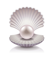 object shell vector image