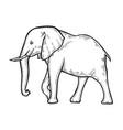 elephant hand drawn vector image
