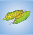 vegetable icon object vector image