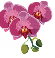 Watercolor Orchid flowers vector image