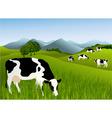 Cows vector image