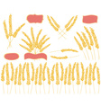 wheat doodles colored vector image