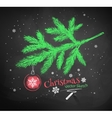 Christmas tree fir branch vector image