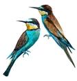Watercolor european bee-eater bird vector image
