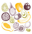 collection of tropical fruits vector image