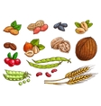 Nuts grain berries sketch elements vector image