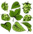 Hops graphic set vector image