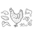 chicken and cutted meat vector image