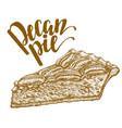 hand drawn of pecan pie vector image