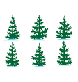 Set of firs vector image vector image