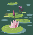 Blossoming lotuses vector image