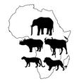 africa big five vector image