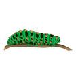 motley green caterpillar creeps along the branch vector image