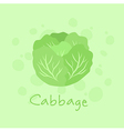 Vegetable Cabbage Nature vector image