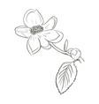 beautiful flower draw vector image