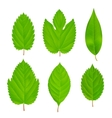 Green Leaves Isolated Set vector image